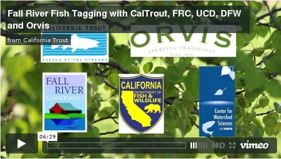 Fall River fish tagging video
